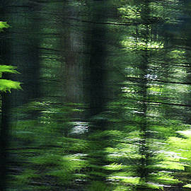 The Forest For The Trees by Linda Shafer