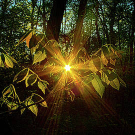 THe Forest Through The Trees - Phil Koch