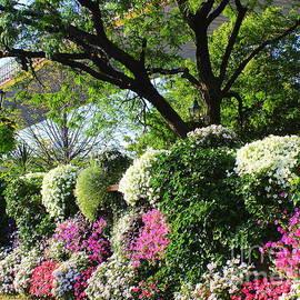 The Gardens Under the Brooklyn Bridge by Dora Sofia Caputo Photographic Design and Fine Art