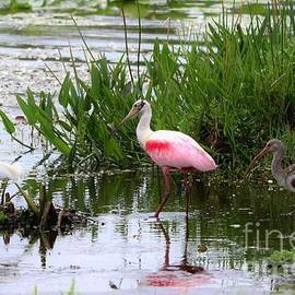Diann Fisher - The Gathering - Egret, Spoonbill and Limpkin