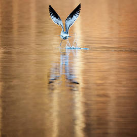 The Gift of Flight by Bill Wakeley