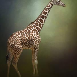 The Giraffe by David and Carol Kelly