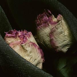 Cristina-Velina Ion - The gorgeous lady rose