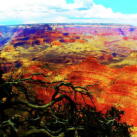 Susan Vineyard - The Grand Grand Canyon
