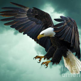 KaFra Art - The Great Bald Eagle