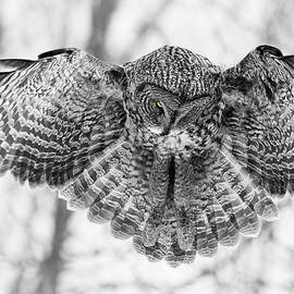 Mircea Costina Photography - The Great Grey Owl in Black and White