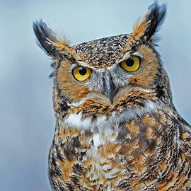 The Great Horned Owl by Asbed Iskedjian