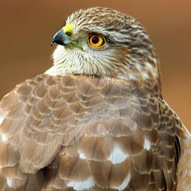 The Handsome Hawk by Tina LeCour