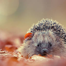 Roeselien Raimond - The Happy Hedgehog