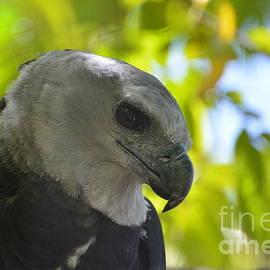 Don Columbus - The Harpy Stare