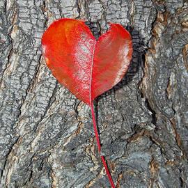 Debra Thompson - The Heart of a Tree