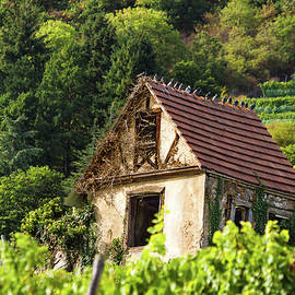 Paul MAURICE - The house in the vineyards