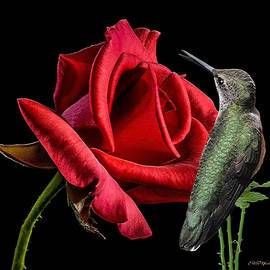 Ericamaxine Price - The Hummer and the Rose 868