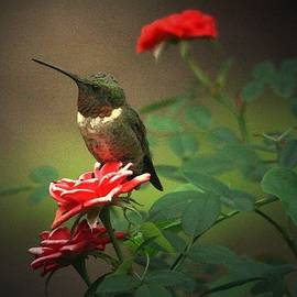 The Hummer And The Rose by Carrie OBrien Sibley
