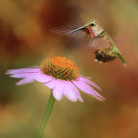 Jai Johnson - The Hummingbird Approach