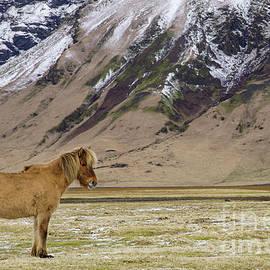 Brian Kamprath - The Icelandic Horse