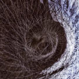 The Inner Ear Of Trees by Deborah Hughes