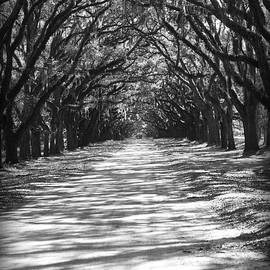 Carol Groenen - Live Oaks Lane with Shadows - Black and White