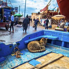 Rene Triay Photography - The Kitty Cat of Essaouira  Marrakesh