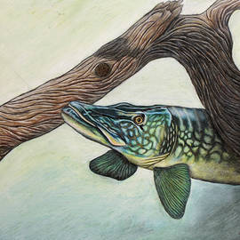 Andrew Rosenberger - The Legend of the Susqie Muskie