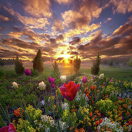 The Light That Shines Our Way Home - Phil Koch