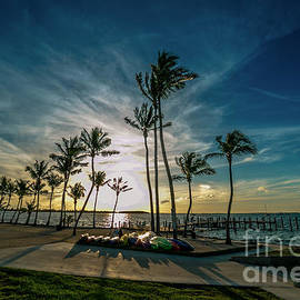 Rene Triay Photography - The Line of Palms