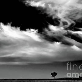 The Liverpool Plains - Bw by Werner Padarin