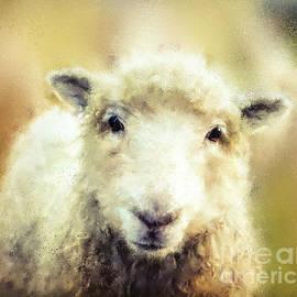 Tina LeCour - The Lofty Lamb