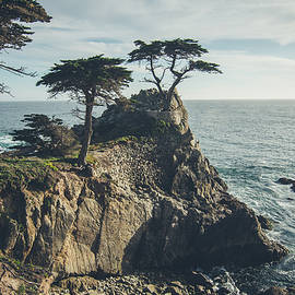 The Lone Cypress No.2 by Margaret Pitcher