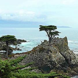 The Lone Cypress Stands Alone by Lyuba Filatova