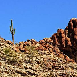 Robert Bales - The Lonesome Saguaro