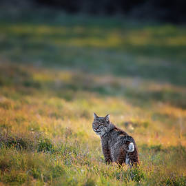 The Look by Bill Wakeley