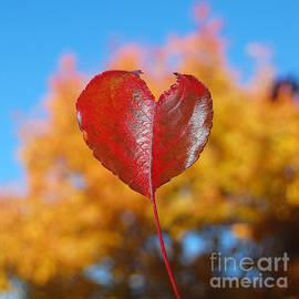 Debra Thompson - The Love of Fall