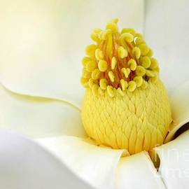 The Luscious Magnolia by Mary Deal
