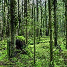 The Magic forest by Alex Lyubar