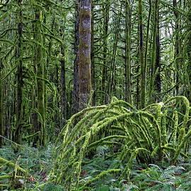 The Magic Rainforest  by Alex Lyubar