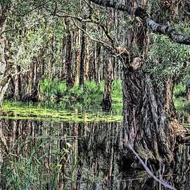 Wallaroo Images - The Mangroves