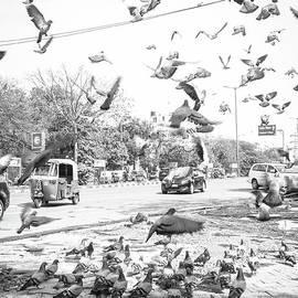 The Many Shades Of Delhi - Flying Pigeons by Neha Gupta