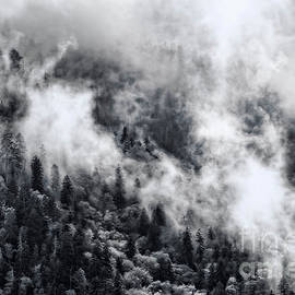 The Misty Smoky Mountains in Black and White by Kay Brewer