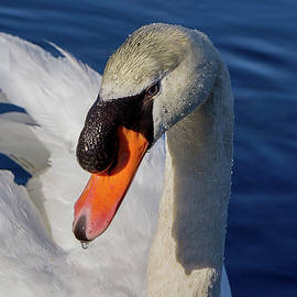 Linda Howes - The Most Beautiful Swan