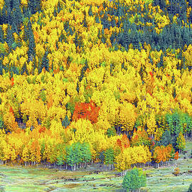 Bijan Pirnia - The Multitudinous Array Of Colors In Our Nearby National Forest