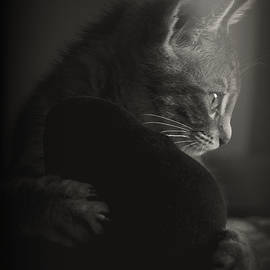 The Mystery of a Cat's Thoughts by Loriental Photography