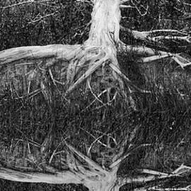 The Old Tree by Debra and Dave Vanderlaan