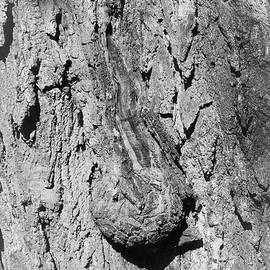 Mario MJ Perron - The Old Tree