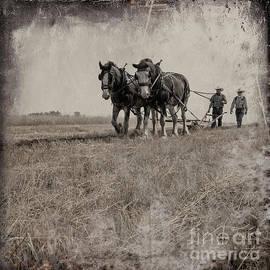 The Original Horsepower by Brad Allen Fine Art