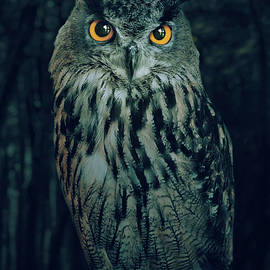 Carlos Caetano - The Owl