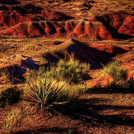 Roger Passman - The Painted Desert from Kachina Point