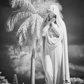 Olga Zamora - The Palm