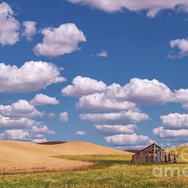 The Palouse by Sharon Seaward