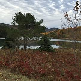Pamela J Bennett - The Park Loop Road at Acadia